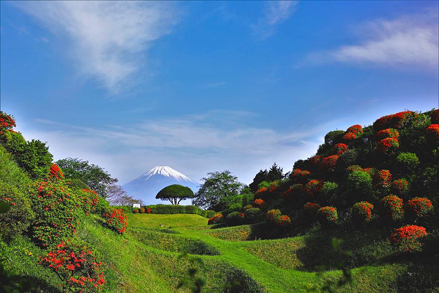 山中城跡公園は、景観も良く天気のいい日にはバッチリ富士山と駿河湾が見えます。箱根を越えて、中伊豆・西伊豆へ向かうときは、休憩がてら立ち寄ってください。