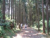 こちらの写真は、山中城跡公園のすぐわきにある「箱根旧街道石畳」です。さらに箱根方向に上っていくと、険しい山道・箱根旧街道を体験できます