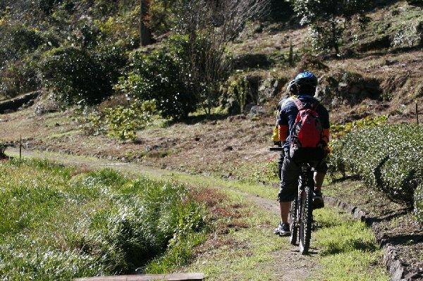 里山MTB体験コース。茶園を横目に進むシングルトラックは昔、地区の小学生が学校へ通う路として活躍し、現在も農林業の路として利用されている。