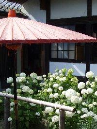 あじさい園の開園中は週末限定でアジサイの天ぷら付き茶蕎麦などもお楽しみいただけます。