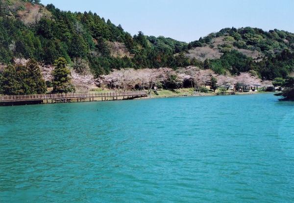 白い帆が風を受けて水面を滑っていく姿は、池の澄んだ水面、周囲の緑あふれる茶畑とのコントラストと相まって、優雅でのどかな雰囲気を漂わせています。