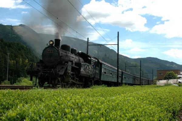 茶畑の中を走るSL