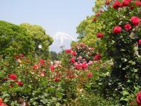 バラ園からの望む富士山