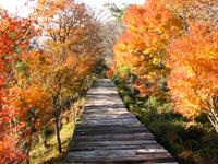 ボードウォーク周辺の紅葉