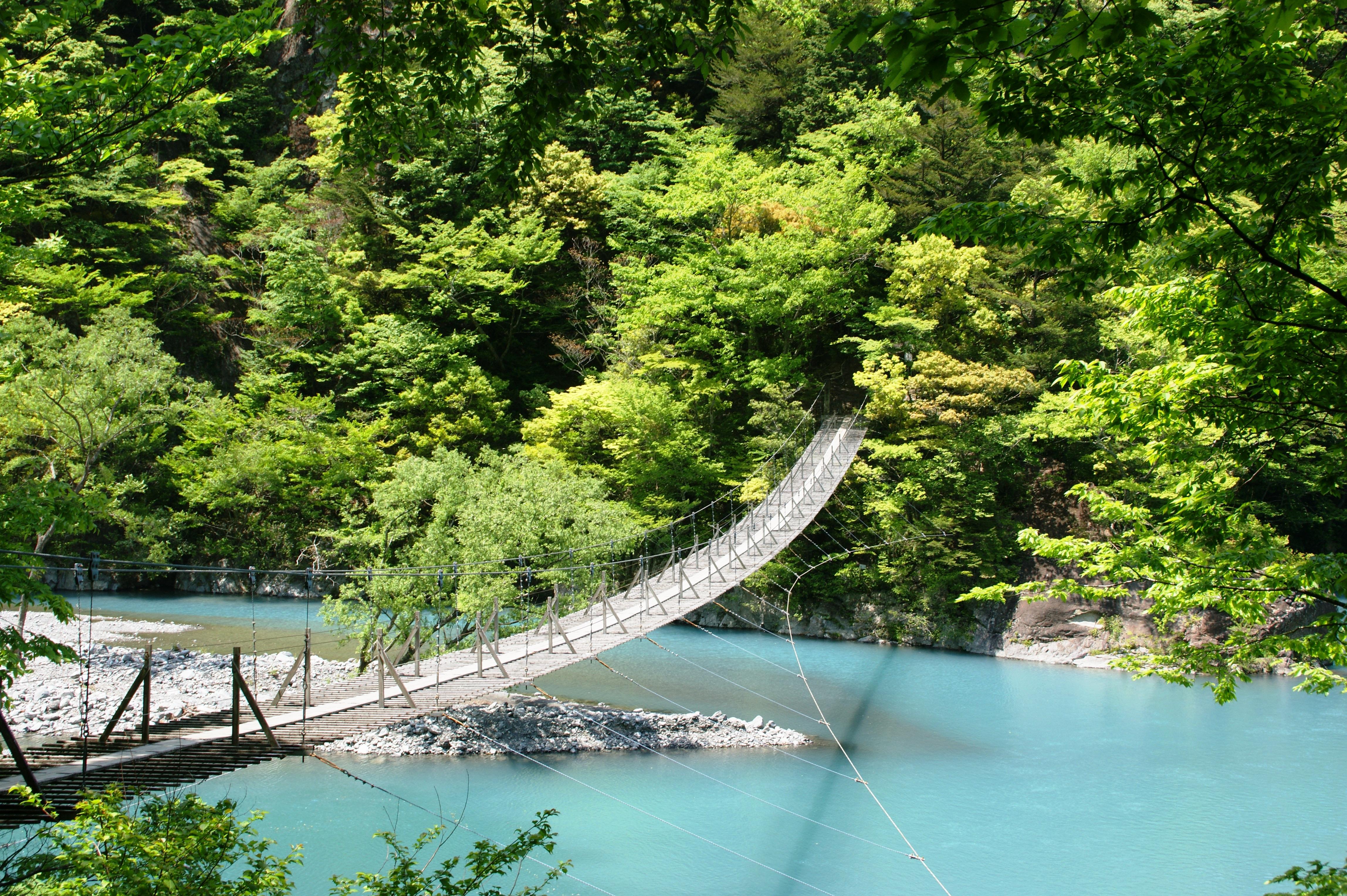 夢のつり橋(新緑)