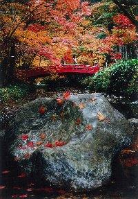例年11月下旬~12月上旬にかけて境内を流れる宮川沿いに約1,000本のモミジが紅葉の見頃を迎えます。「もみじまつり」には舞殿での琴の演奏や、お茶会などが行われます。写真は平成19年度に実施された森町観光フォトコンテスト入賞作品。紅葉、花菖蒲の他にも自然豊かな境内ではシャガやミヤマツツジ、梅など四季折々の花もお楽しみいただけます。