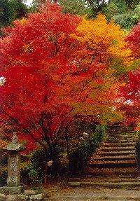 境内にはモミジなど紅葉する樹木が多く秋の紅葉の時期には写真撮影に訪れるカメラマンも多い。本堂が高台になっているので立体的な紅葉の境内を見下ろすことができる。
