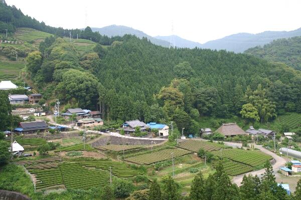 山間に切り開かれた茶園と亀久保集落友田家住宅は右下の茅葺きの家屋。