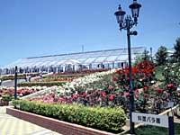 島田市ばらの丘公園2