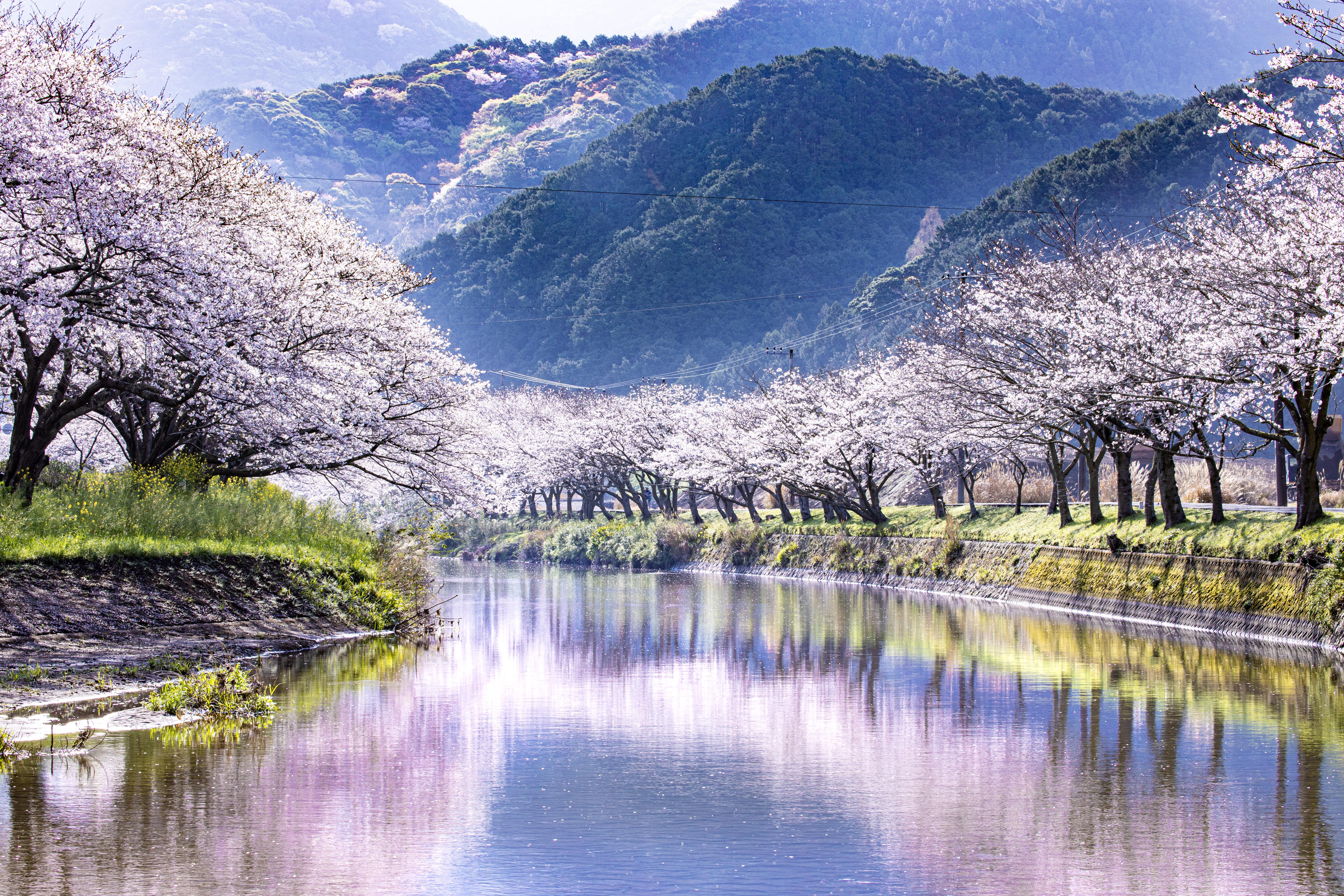 那賀川堤(ナカガワツツミ)