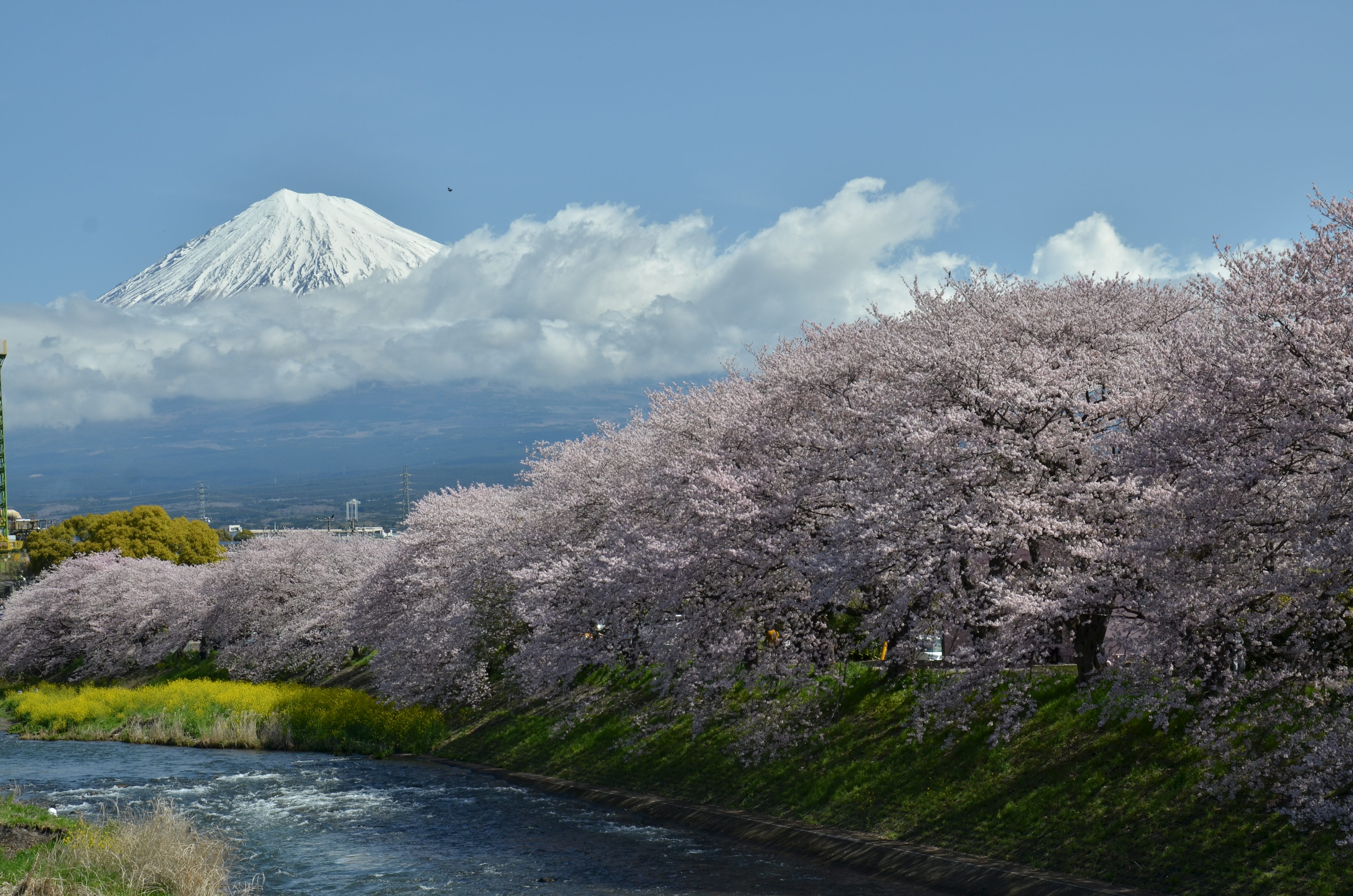 ライトアップされた夜桜も見ごたえがあります。