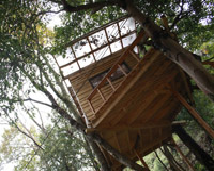 その名の通り、木に据え付けたように5m上から木々を下に眺める雰囲気は冒険気分を盛り上げます。