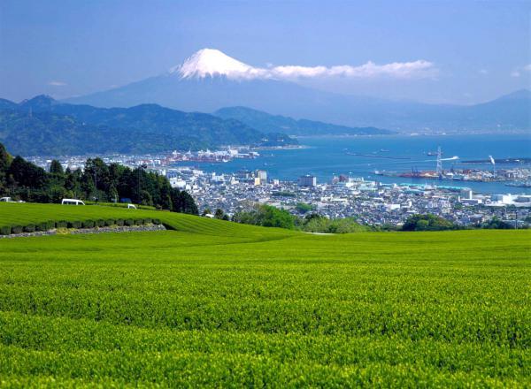 駿河湾富嶽三十六景-第二十一景-日本平