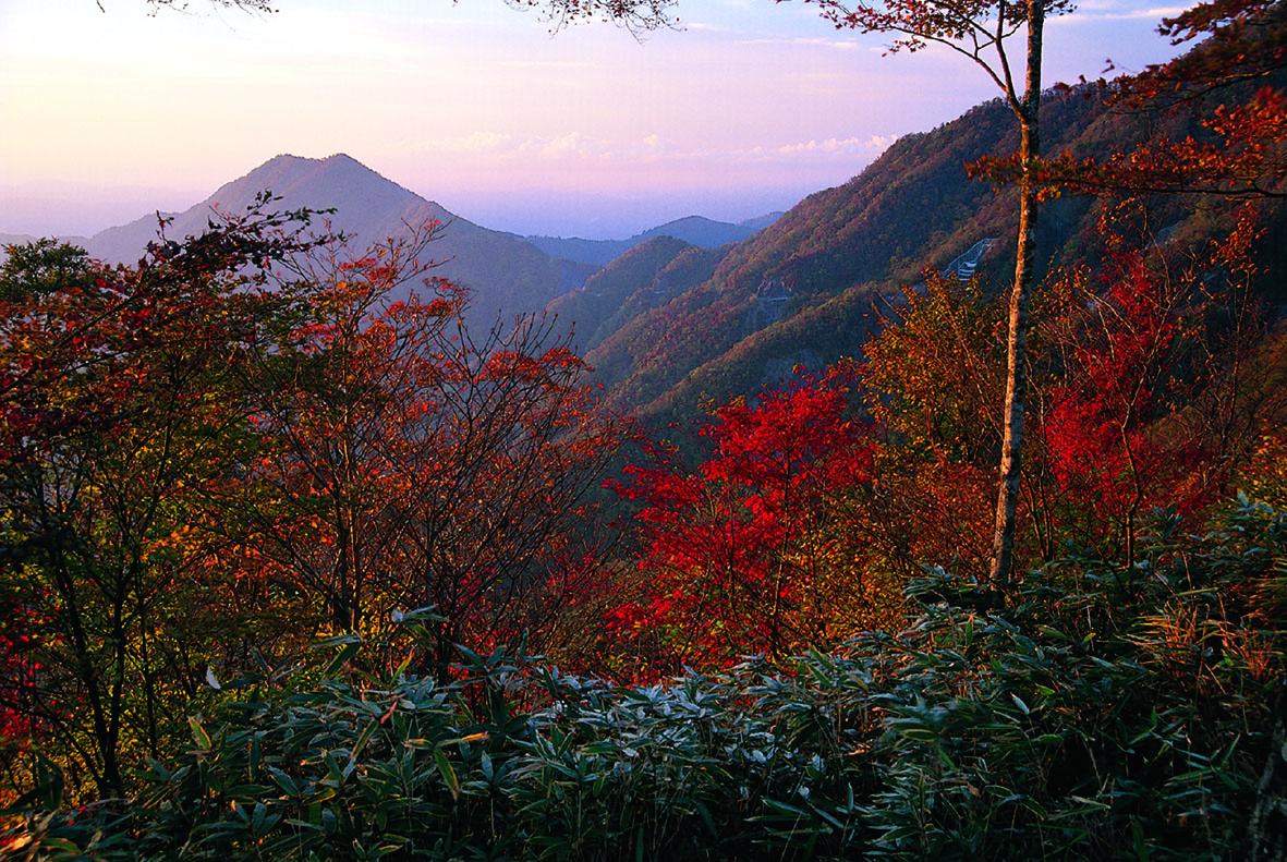 紅葉する大札山(登山口かた山頂方面を撮影)