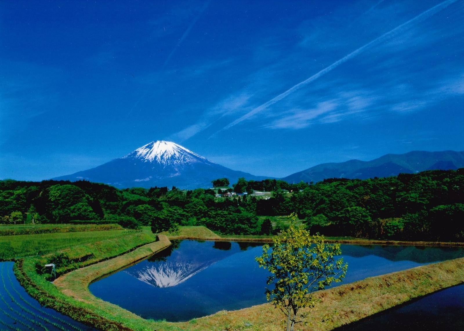 田んぼに映る富士山