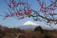 ©富士山観光交流ビューロー