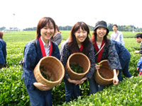 広がる茶園でお茶摘み体験