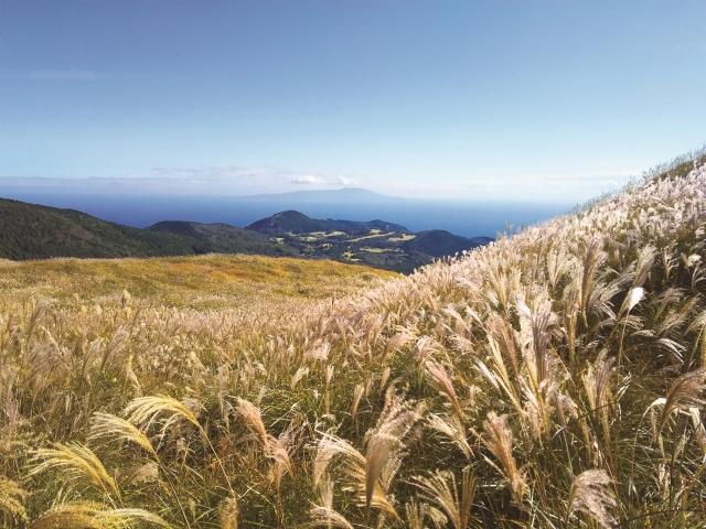 稲取細野高原