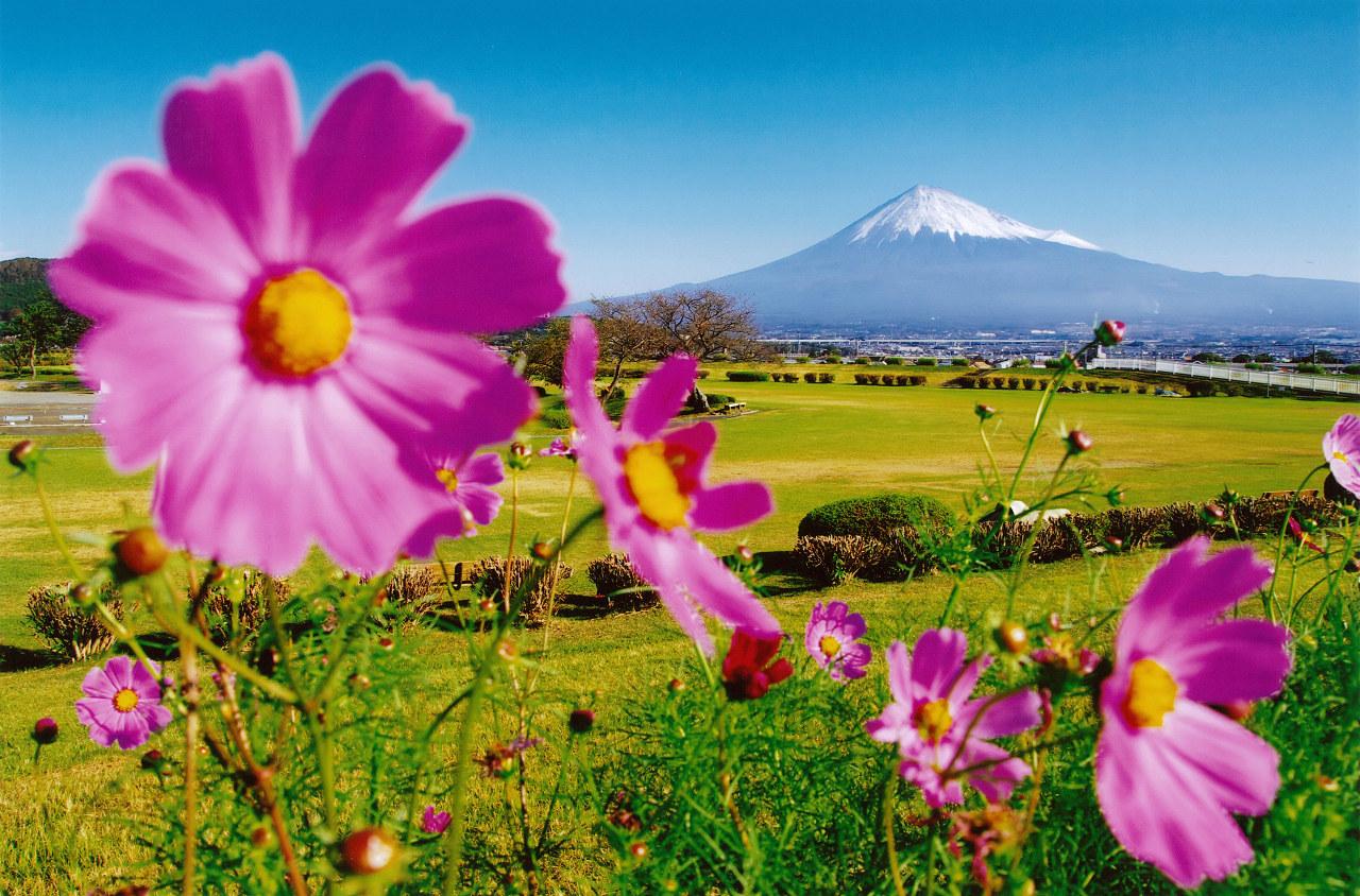 秋にはコスモスや彼岸花が咲き誇ります。 第7回富士山百景写真コンテストヤングアイ賞「秋から冬へ」