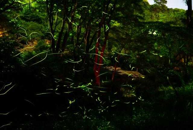 中止】熱海梅園初川清流ほたる鑑賞の夕べ/ハローナビしずおか 静岡県 ...